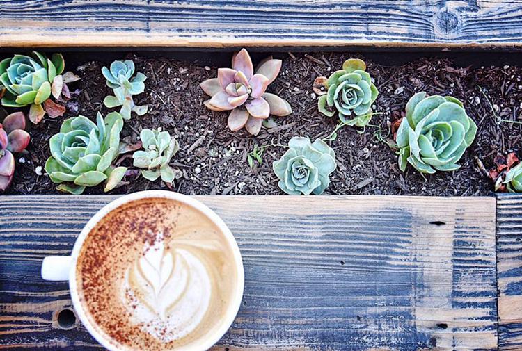 HOOT Coffee Rocklin, CA