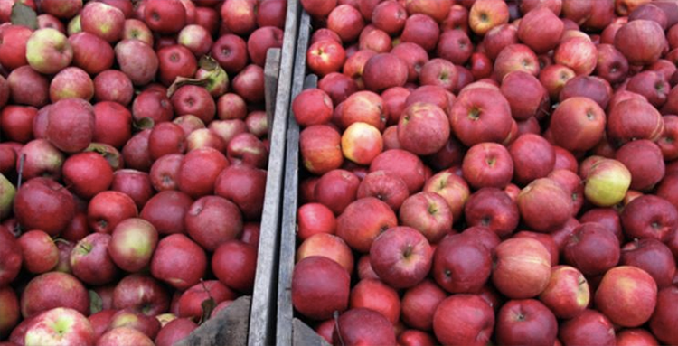 Apple Ridge Farms, Apple Hill Farms