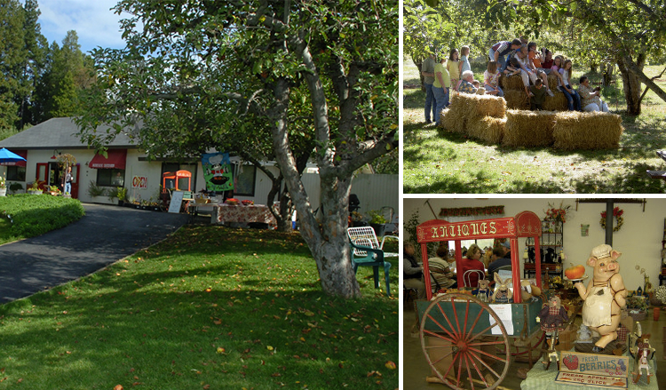 Bodhaine Ranch, Apple Hill Farms