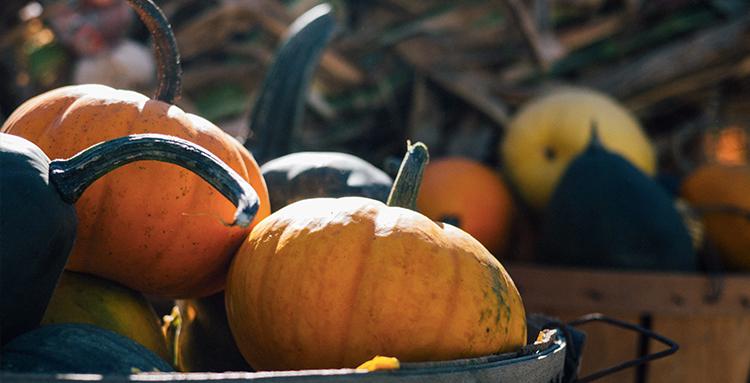 Apple Hill Farms Pumpkin Patches