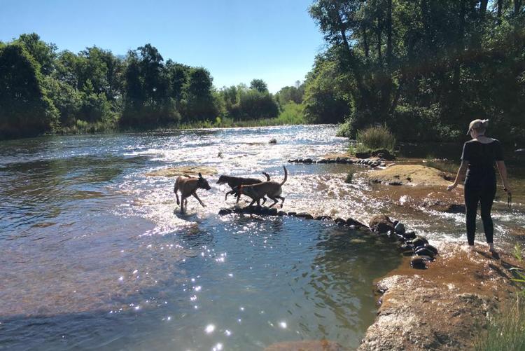 Animal Minds Sacramento Dog Training