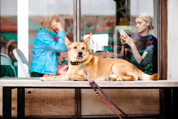 Dog-friendly restaurants in Sacramento