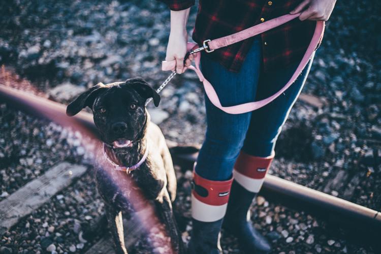 Dog walkers in Sacramento California