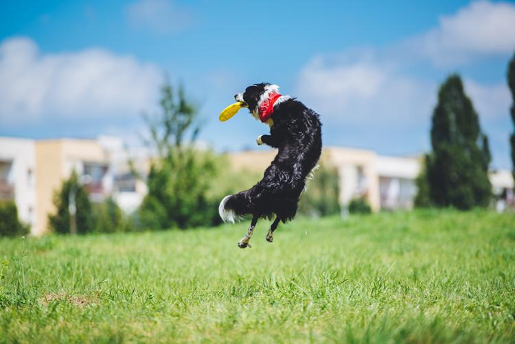 Off-leash dog parks in Sacramento