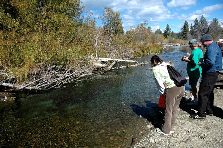 Salmon Migration Lake Tahoe
