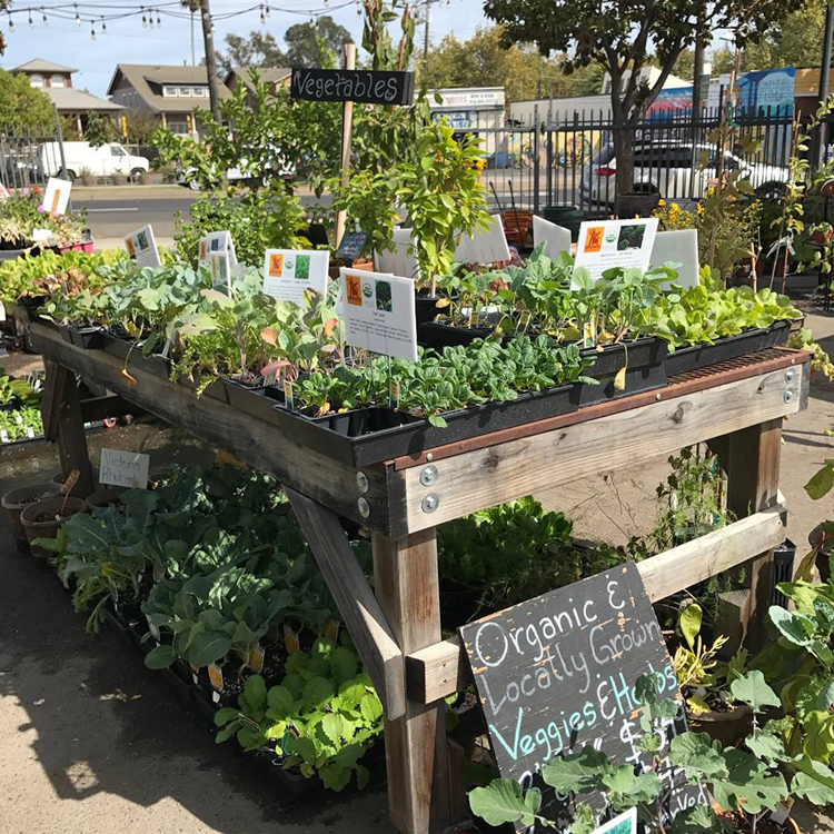 The Plant Foundry Sacramento, CA