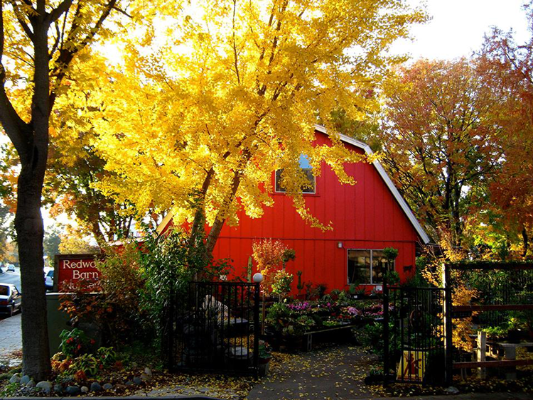 Redwood Barn Nursery Inc. Davis, CA
