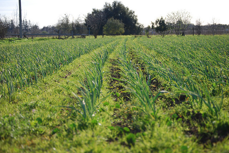 Soil Barn Farms Rancho Cordova, CA