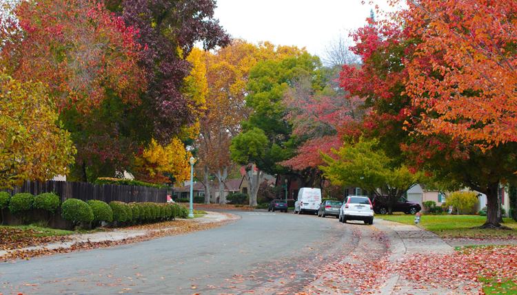 Sacramento City of Trees