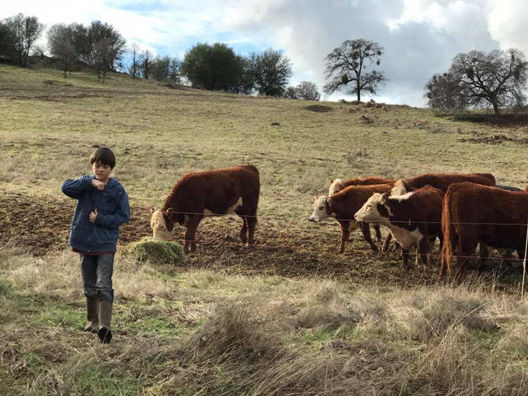 Family Friendly Farm