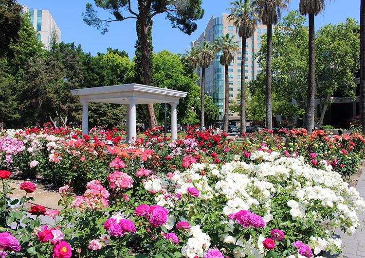 International World Peace Rose Gardens Sacramento