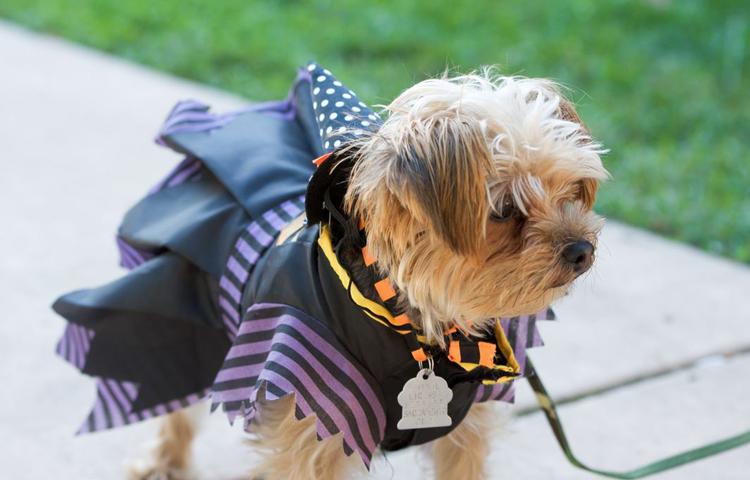 Midtown Halloween Festival & Pooch Parade