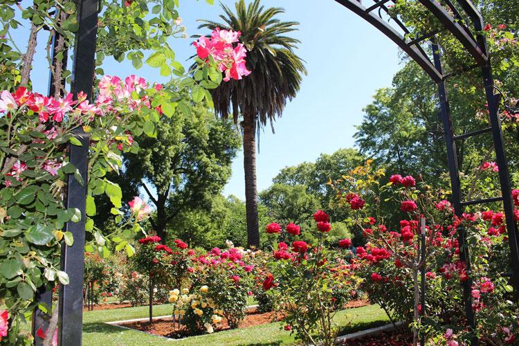 McKinley Park Rose Garden Sacramento