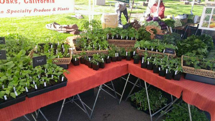 Carmichael Park Farmers' Market